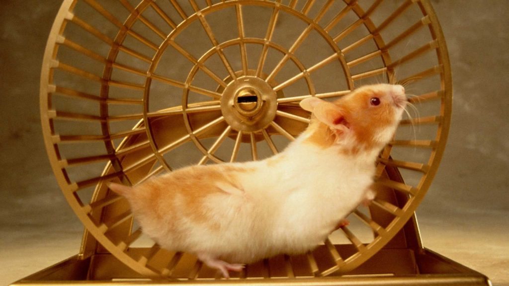 Hamster Wheel as an example of Finite player (the hamster) versus an Infinite game